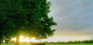 Tree-wallpaper-to-use-as-background-11